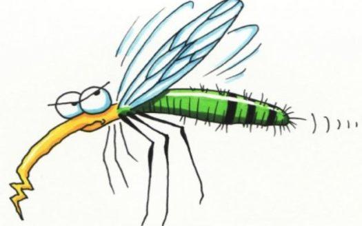 zanzare-Alto-Garda-Immobiliare-525x328 HOME PAGE